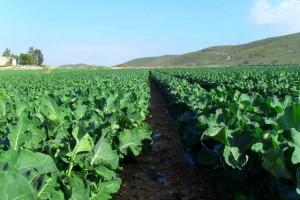 agricultura ecologica