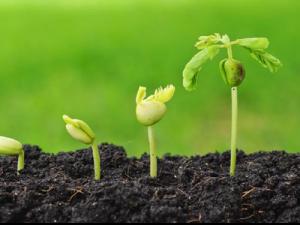 plantes montsant