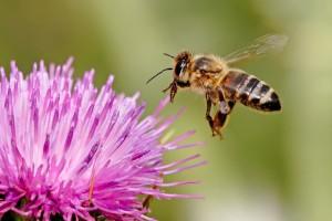 abella medi ambient