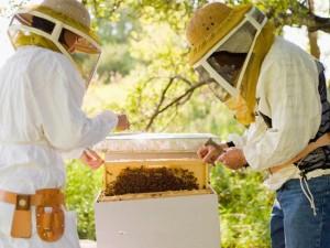 apicultura millores