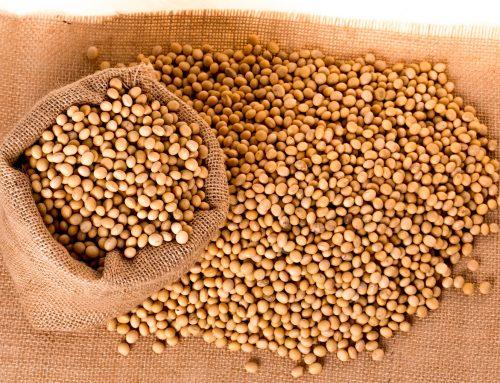 Les importacions de soja a la Unió Europea augmenten un 121%