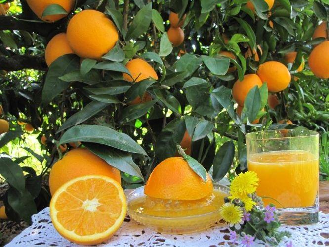 suc-taronja-natural-mami-taronges