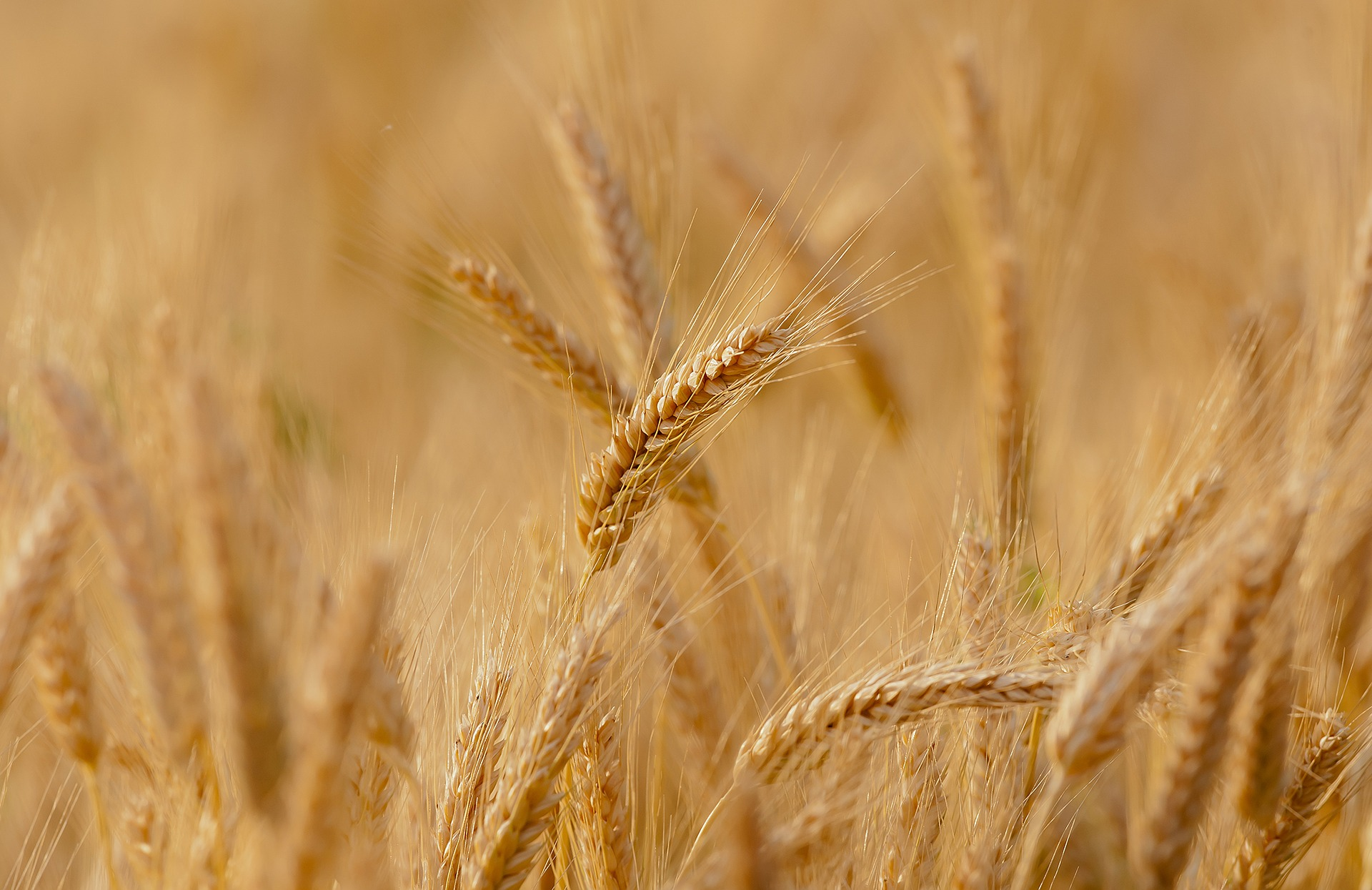 blat de moro