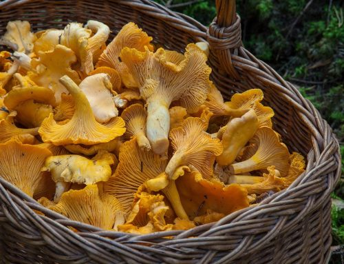 Tastet i bolets: els dos imprescindibles del berguedà