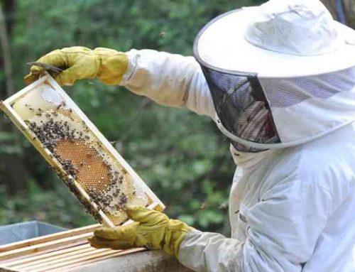 Un llibre mostra l'empremta cultural de l'apicultura a Catalunya