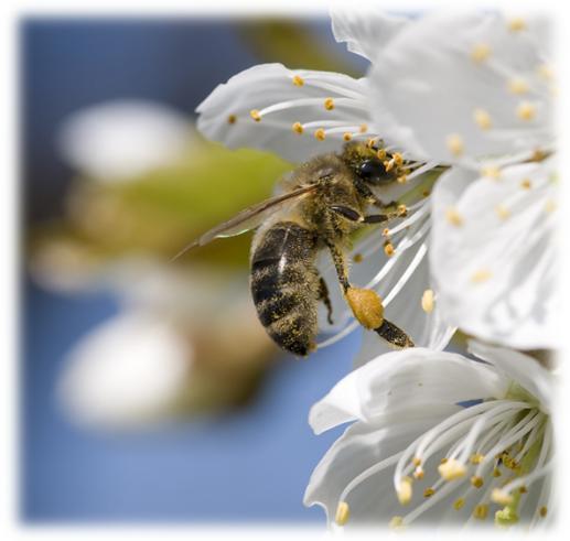 La pandèmia salva la producció de mel i a les abelles