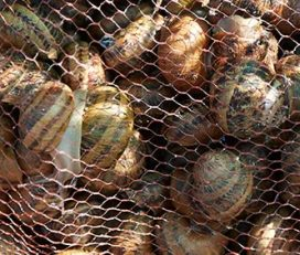 Snails House – La Casa dels Cargols