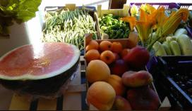 Fruites i verdures l'Hortet