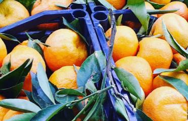VÍMET. fruiteria & queviures