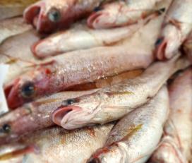 Selga Peix