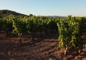 Cooperativa Agrícola d'Albinyana