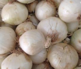 Agropecuària Argentona – El Sindicat