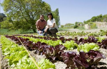 Cooperativa Agrícola Alcover