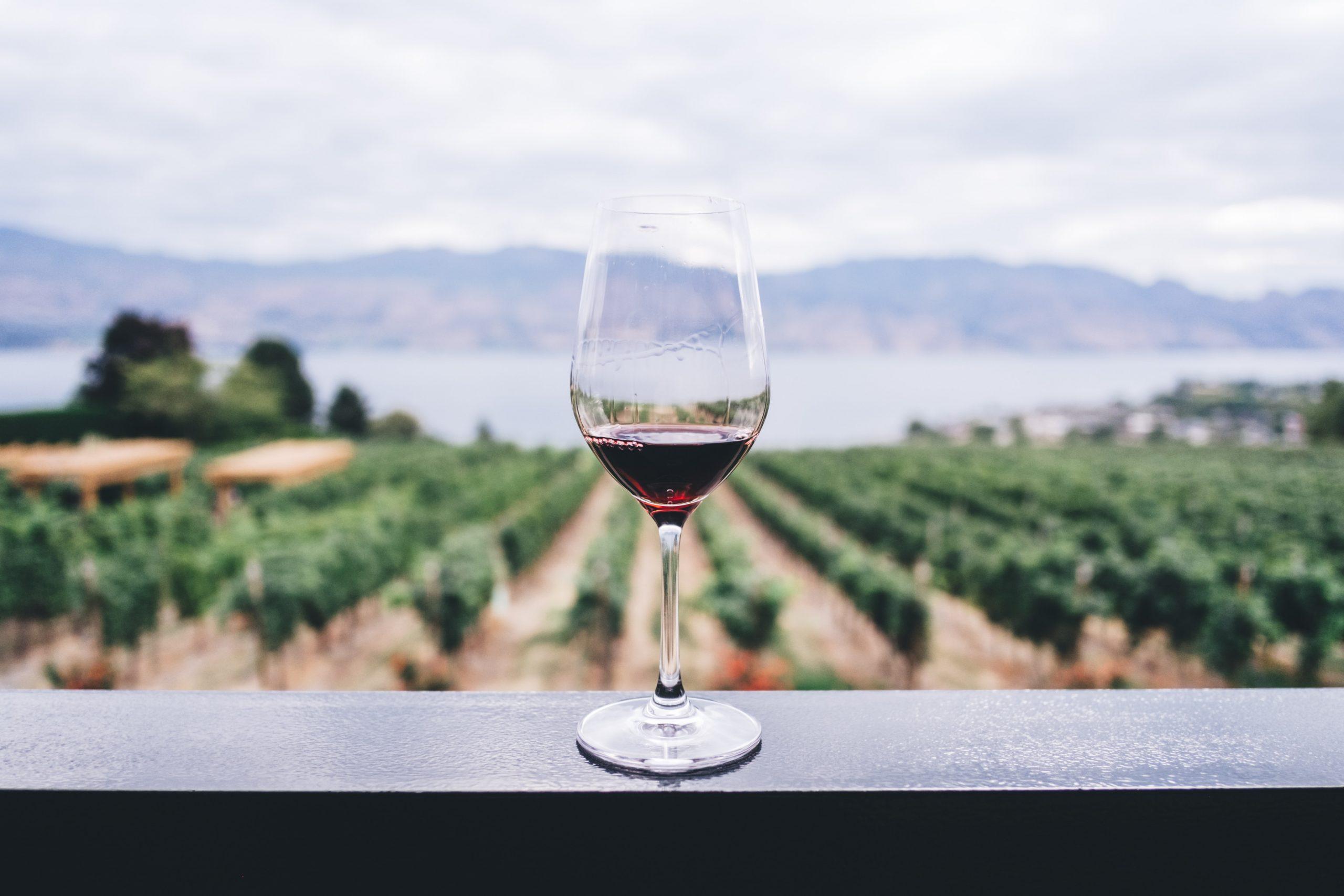 guia vins