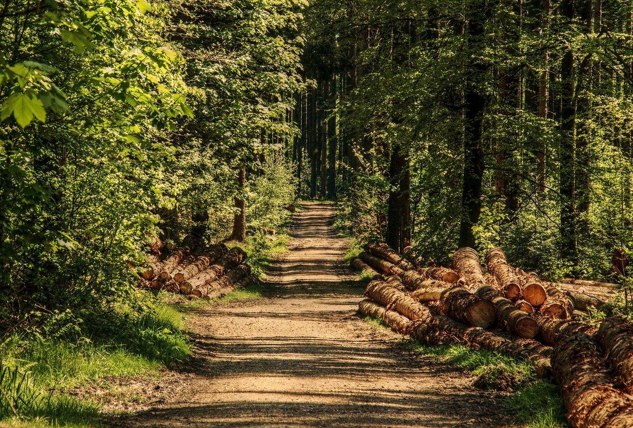 tones de fusta