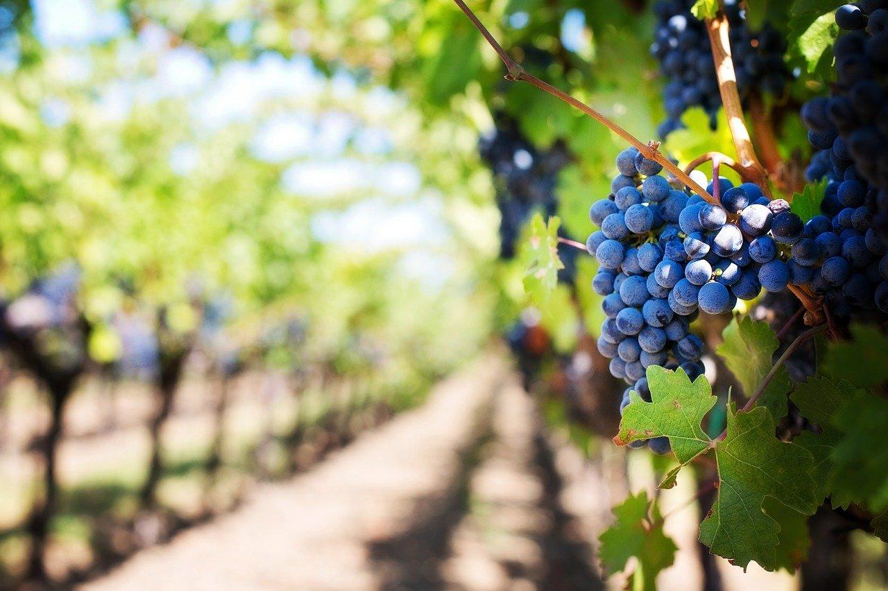 mapa vitivinícola