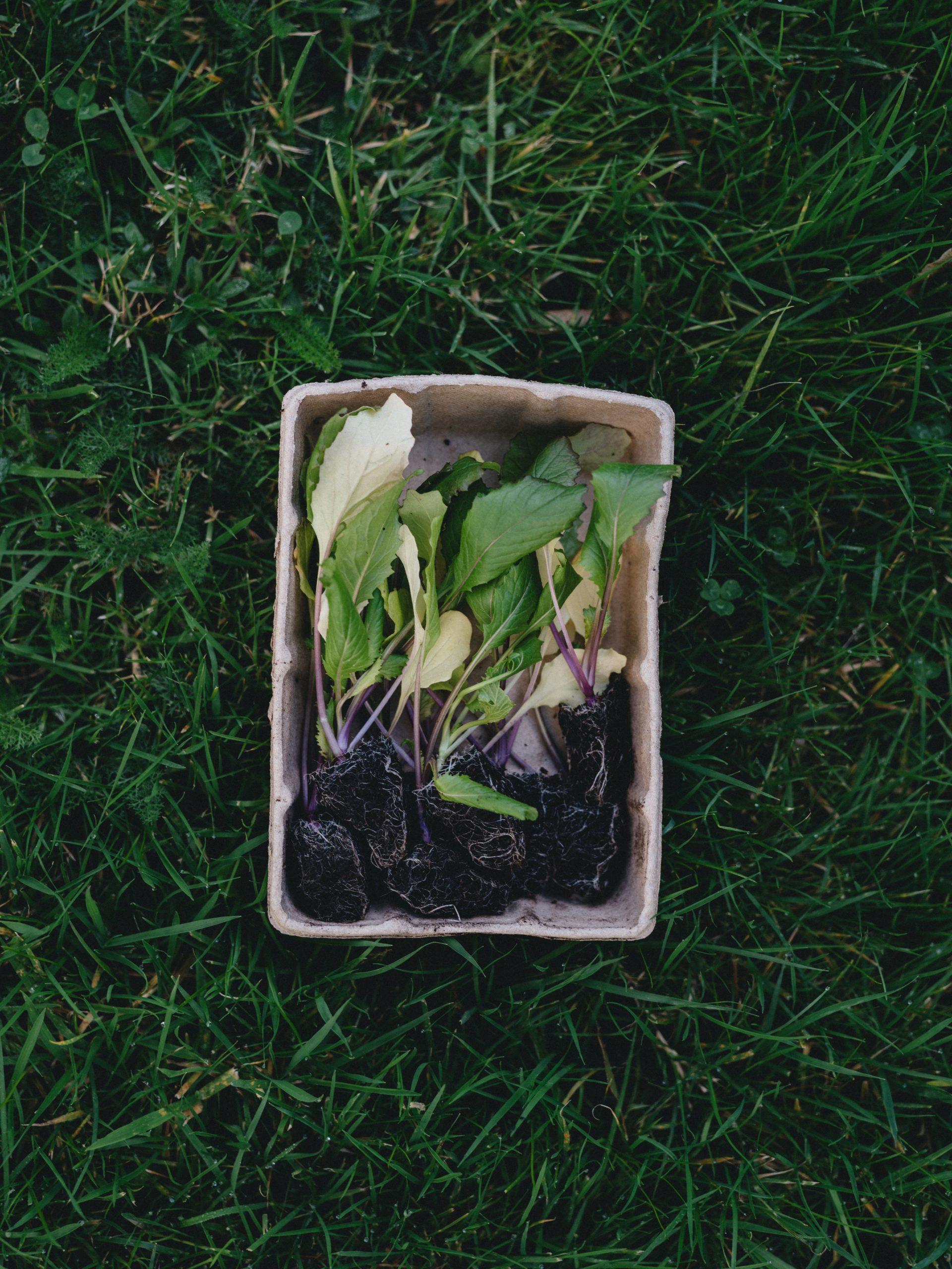 productes biodegradables casolans